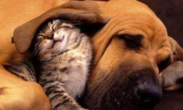 Hechizo de protección de mascotas